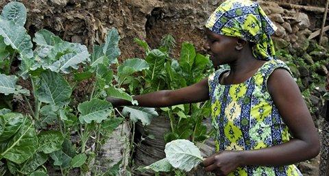 A l'occasion de la Journée Mondiale de l' Alimentation du 16 octobre, SOLIDARITES INTERNATIONAL met en avant un projet d'agriculture urbaine aussi simple qu'efficace : l'agriculture en sac.